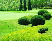 Jardín — Foto de Stock