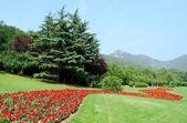 Jardin — Photo