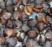 Mollusks — Stock Photo