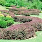 Garden — Stock Photo #1269995