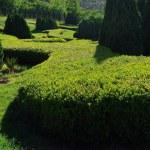 Garden — Stock Photo #1778519