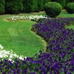 Garden — Stock Photo #2012758
