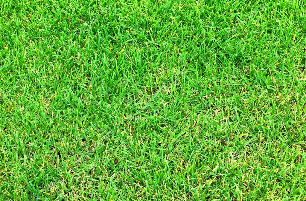 Green grass. Close up.   Stock Photo #2084783