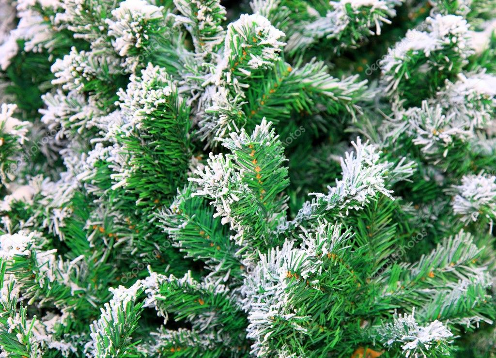Fir tree. Close up.  — Foto Stock #2170365