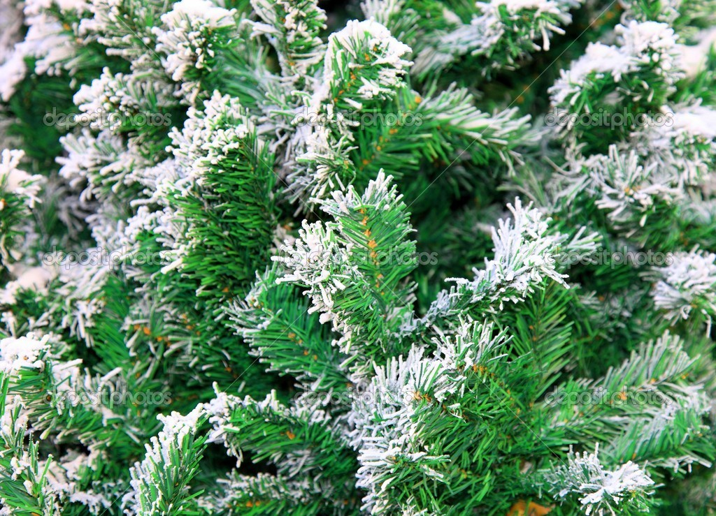 Fir tree. Close up.  — 图库照片 #2170365