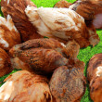 Hens — Stock Photo #2261109