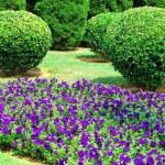 Garden — Stock Photo #2375035