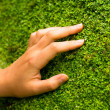 Stock Photo: Hand in the grass