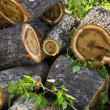 Heap of stumps — Stock Photo