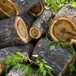 Heap of stumps — Stock Photo #1112662