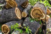 Heap of stumps — Stock Photo