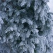 Icescaped blue fir — Stock Photo