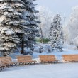 Benchs in snow winter park — Foto Stock
