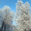 Snow winter park under blue sky — Stock Photo #1113142