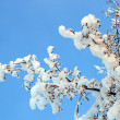 Stock Photo: Winter tree branch under snow