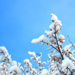Winter trees branches under snow — Stock Photo