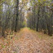 Stock Photo: Wilderness road in autumn forest
