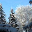 Winter snow trees under blue sky — Stock Photo