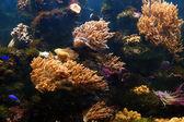 Tropical aquarium 1 — Stock Photo