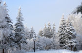 Snow winter park — Stock Photo