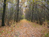 Wilderness road in autumn forest — Stock Photo
