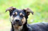 Young pitiful stray dog — Stock Photo