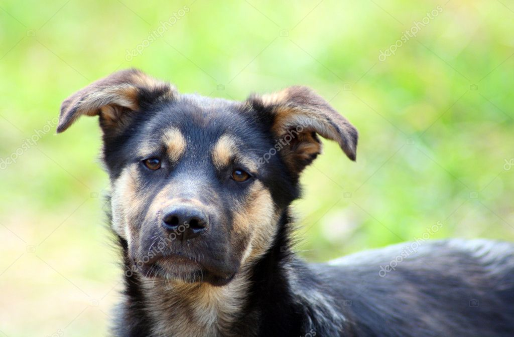 Young pitiful stray dog looking on you — Stock Photo #1115194
