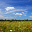 Stock Photo: Summer field landscape