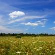 Summer field landscape — Stock Photo #1121570