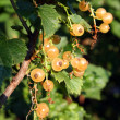White currant berry — Stock Photo