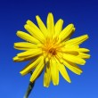 Stock Photo: Yellow flower under sky