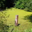 Stump in bog — Stock Photo