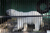 White bear in cage — Stock Photo
