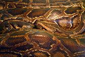 Gewelltes python — Stockfoto