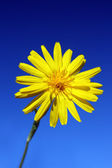 Yellow flower under sky — Stock Photo