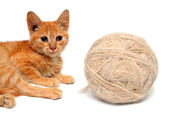 Small cat and big clew of wool — Stock Photo