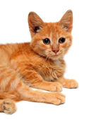 Red small cat — Stock Photo