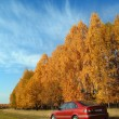 Red car near autumn forest — Stock Photo
