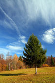Autumn landscape with fir tree — Stock fotografie