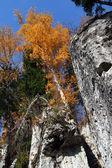 Autumn birch on rock — Stock Photo