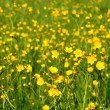 Summer meadow background — Stock Photo