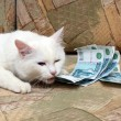 Cat bite money — Stock Photo