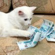 Stock Photo: Cat count money