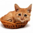 Wretched red cat in basket — Stock Photo