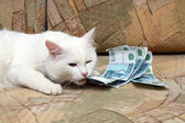 Cat bite money — Stock Photo