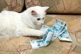 Cat count money — 图库照片