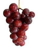 Wet grape berry bunch — Stock Photo