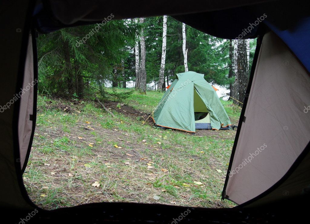 Camping in forest - view from tent — Stock Photo #1593186