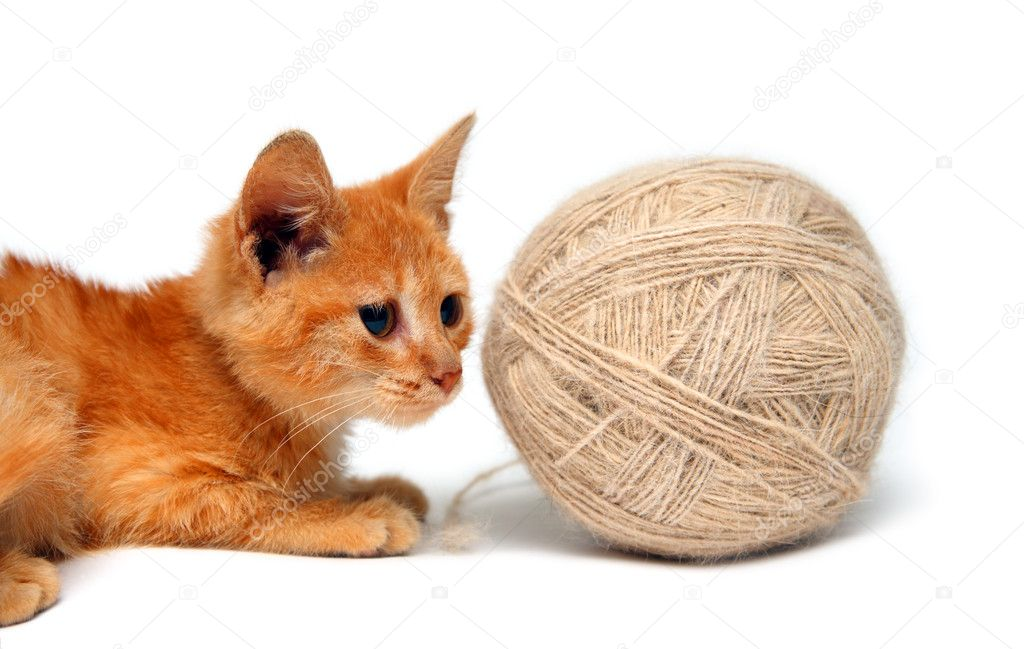 Red small cat and big clew of wool isolated on white   Stock Photo #1593695