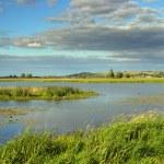 Summer lake landscape — Stock Photo